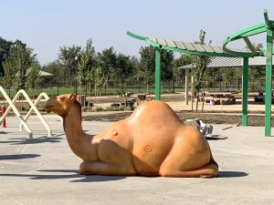 Camel play equipment at Oasis Park, Elk Grove, CA
